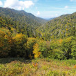 Early fall in Great Smoky Mountains National Park vertical — Stock Photo #33515117