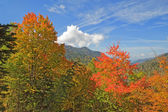 Early fall in Great Smoky Mountains National Park — Foto Stock