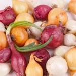 Постер, плакат: Red white and yelow onion sets ready for planting