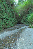Path through Fern Canyon, Prairie Creek Redwoods State Park, Cal — Stockfoto