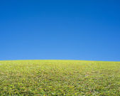 Beautiful landscape with green meadow, fresh air and clean blue — Stock Photo