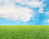 Beautiful landscape with fresh green meadow, cloud and blue sky — Stock Photo