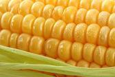 Fresh mealie and dewdrops — Stockfoto