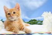 Petit chaton adorable avec les marguerites — Photo