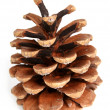 Pine cone on a white background  — Stock Photo