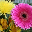 Stock Photo: multicolored flowers