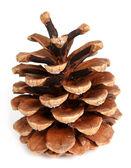 Cono del pino sobre un fondo blanco — Foto de Stock