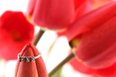 Red tulip with ring — Stock Photo