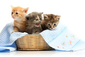 Small kittens in straw basket — Stock Photo