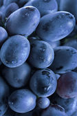 Blue grape cluster — Stock Photo