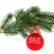 Christmas tree branch, isolated — Stock Photo