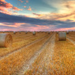 Sunset over the field - Stock Photo