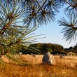 Landscape in Carnac — Stock Photo