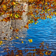 Stock Photo: Canal in Autumn