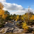 Royalty-Free Stock Photo: Forest of Fontainebleau