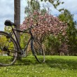 Old Bicycle in a Park in Spring — Stock Photo