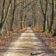 Footpath in a Forest — Stock Photo