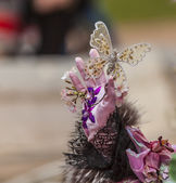 ANNECY, FRANCE, MARCH 15, 2014: Butterfly Decoration — Stock Photo