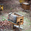 Stock Photo: Rural wooden beehives on meadow
