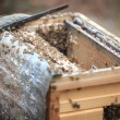 Opening bee hive — Stock Photo #33638569
