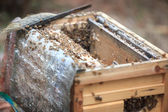 Opening bee hive — Stock Photo