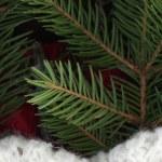 Spruce still life — Stock Photo #4699254