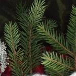 Spruce still life — Stock Photo #4699256