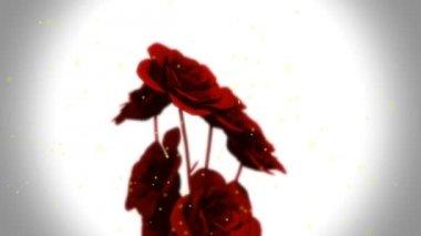 Flowers animation — Stock Video