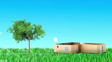 Growing tree animation — Stock Video
