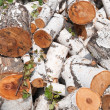 Birch logs — Stock Photo