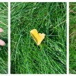 Hand on the grass — Stock Photo