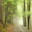 Forest path in the fog - Stock Photo