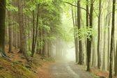 Caminho de floresta no nevoeiro — Foto Stock
