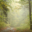Autumn forest in the fog — Stock Photo