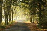 Forest road at dawn — Stock Photo