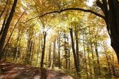 Autumn forest in the sunshine — Stock Photo