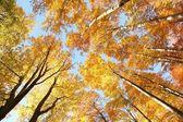 Autumn canopy — Stock Photo