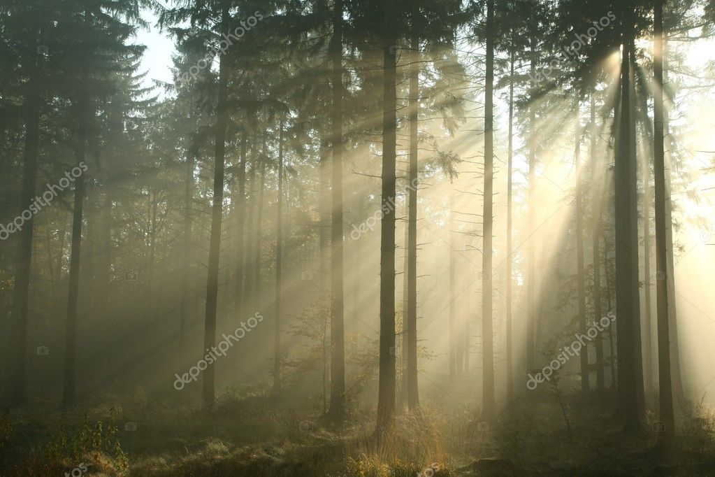 Coniferous forest on a misty autumn morning. — Stock Photo #13910934