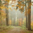 Autumn forest on a misty morning — Stock fotografie