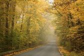 Misty autumn morning — Stock Photo