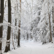 Winter forest — Stock Photo #18137165
