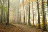 Path in misty autumn forest — Stock Photo