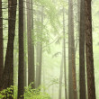 Trail through misty spring forest — Stock Photo