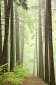 Trail through misty spring forest — Foto Stock