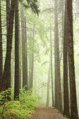 Trilha pela floresta nublada primavera — Foto Stock