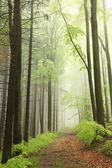Floresta de primavera durante a chuva — Foto Stock