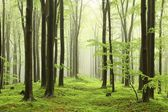 Spring beech forest in the fog — Foto Stock