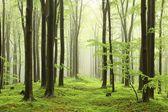 Floresta de faias primavera no nevoeiro — Foto Stock