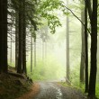 Majestic spring forest — Stock Photo