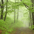 Trail on a foggy spring morning — Stock Photo